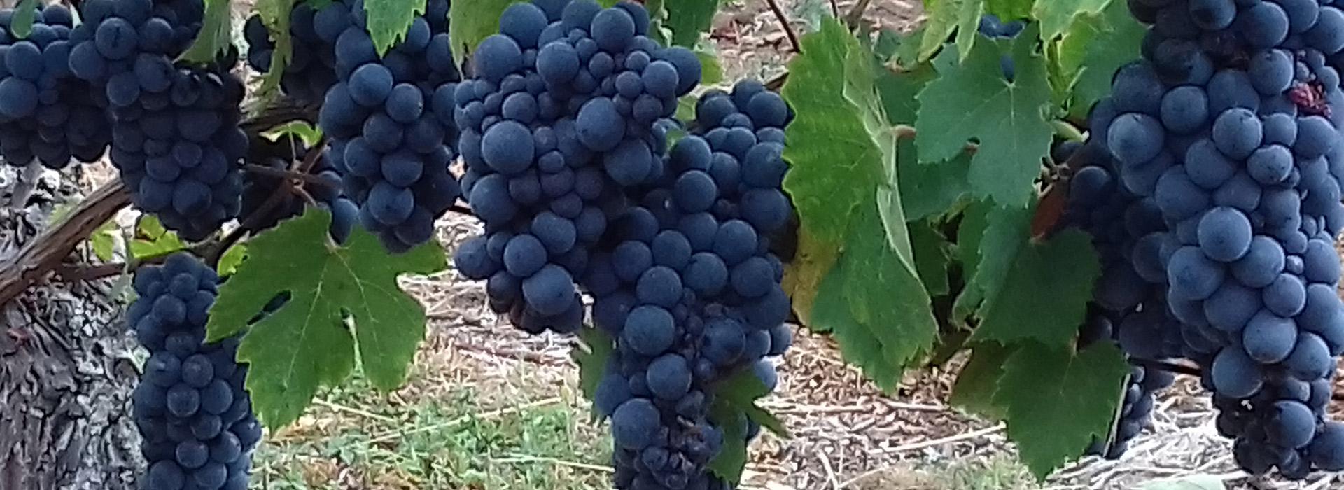 Domaine viticole thouars