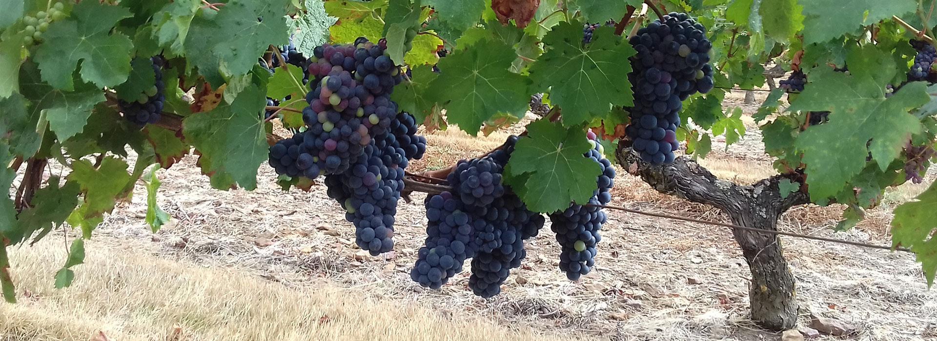 viticulteur 79