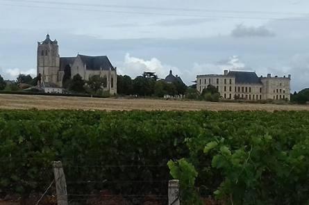 domaine viticole saumur
