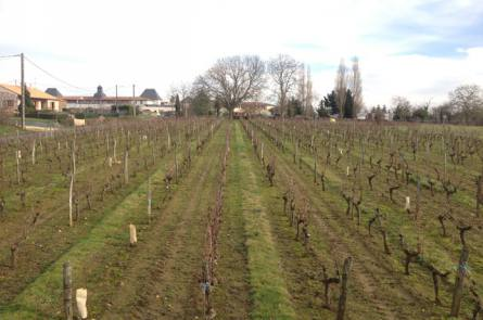 domaine viticole 37