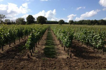domaine viticole richelie