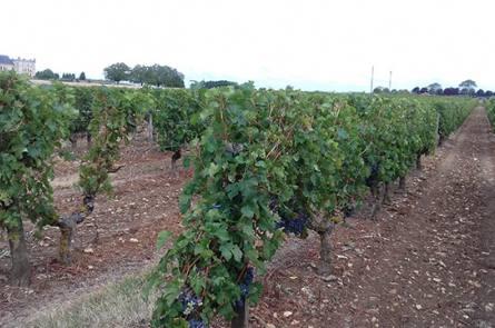 viticulteur oiron